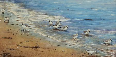 Sanderlings on the beach