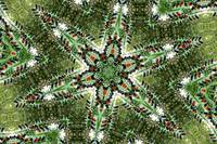 trafficlight tree mandala 1