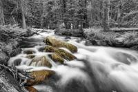 Rocky Mountain National Forest Stream BWSC