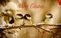 Merry Christmas Finches