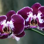 """Orchid Splendor"" by LyndaLehmann"