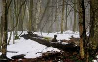 Snow Fog In The Forest  #166