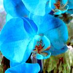 """A Fine Blue Orchid Dream 3"" by LyndaLehmann"