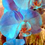 """Blue Orchid Exotic 2"" by LyndaLehmann"