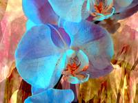 Blue Orchid Exotic 2