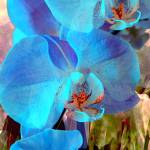 """Blue Orchid Exotic 3"" by LyndaLehmann"