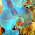 """Orchid Exotic 3"" by LyndaLehmann"