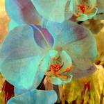 """Orchid Exotic 5"" by LyndaLehmann"