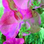 """""""Magenta Orchid Trio"""" by LyndaLehmann"""