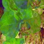 """""""Green Orchid Trio"""" by LyndaLehmann"""