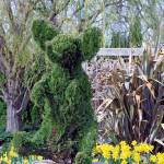 """Topiary Plant Ornament Shaped Like An Elephant"" by cvpictures"