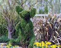 Topiary Plant Ornament Shaped Like An Elephant