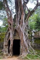 Angkor Temple Ta Prohm Siem Reap Cambodia