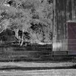 """Cow Barn and Red Door Black and White"" by KsWorldArt"