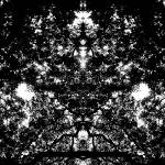 """ABSTRACT PENANG TREES #4318, EDIT C, 24 DEC 15"" by nawfalnur"