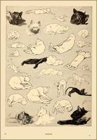 Cats- Pictures without Words' 1897 Theophile Alexa