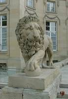 Lion At Schloss