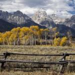 """Aspens in Grand Teton"" by KenThomas"
