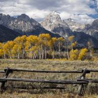 Aspens in Grand Teton Art Prints & Posters by Ken Thomas