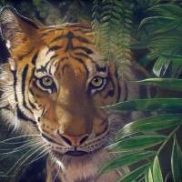 TigerCoolAndShadyIK Art Prints & Posters by José Rodriguez