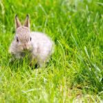 """Baby Bunny"" by mattsellars"