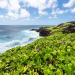 """Maui Shoreline"" by mattsellars"
