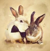 Bunnies Are In Love