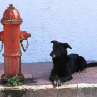 """Dog and Fire Hydrant"" by Robert Hamm"