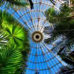 """Convex Conservatory"" by lyndazurn"