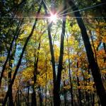 """""""Autumn Amazement"""" by lyndazurn"""