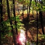 """""""Sparkly Woodland Creek"""" by lyndazurn"""