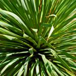 """Complex Cacti Triptych 3 of 3"" by lyndazurn"