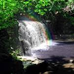 """Rainbow Wooded Waterfall"" by lyndazurn"