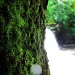 """""""Sweet Fuzzy Moss"""" by lyndazurn"""