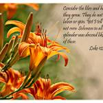 """""""Consider the Lilies"""" by praslicka"""