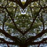 """ABSTRACT PENANG TREES #1, Edit B, on 7Jan16"" by nawfalnur"