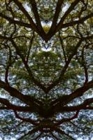 ABSTRACT PENANG TREES #1, Edit B, on 7Jan16