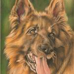 """Beautiful dog"" by Jandy"