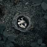 """""""Nesting"""" by shawnvandaele"""