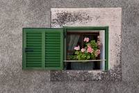 A window with flowers