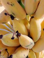 Hawaiian Bananas