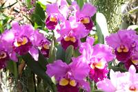 Bold and Beautiful Orchids