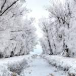 """Winter White"" by RHMiller"