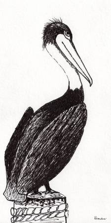 Pelican Paradise Portrait in Ink C2L
