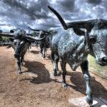 """Longhorns"" by jkphotos"