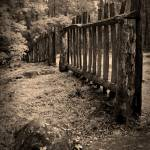 """Old Fence"" by LarryBohlin"