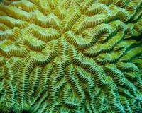 Coral Pattern