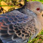 """""""The Eye Of The Turtle Dove"""" by JoaoPonces"""