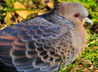 The Eye Of The Turtle Dove
