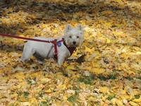 Miss Daisy And The Leaves Of Autumn